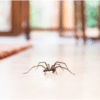 11 Tips to Prevent a Spider Infestation
