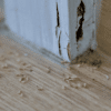 5 Signs Your Home Might Have Termites