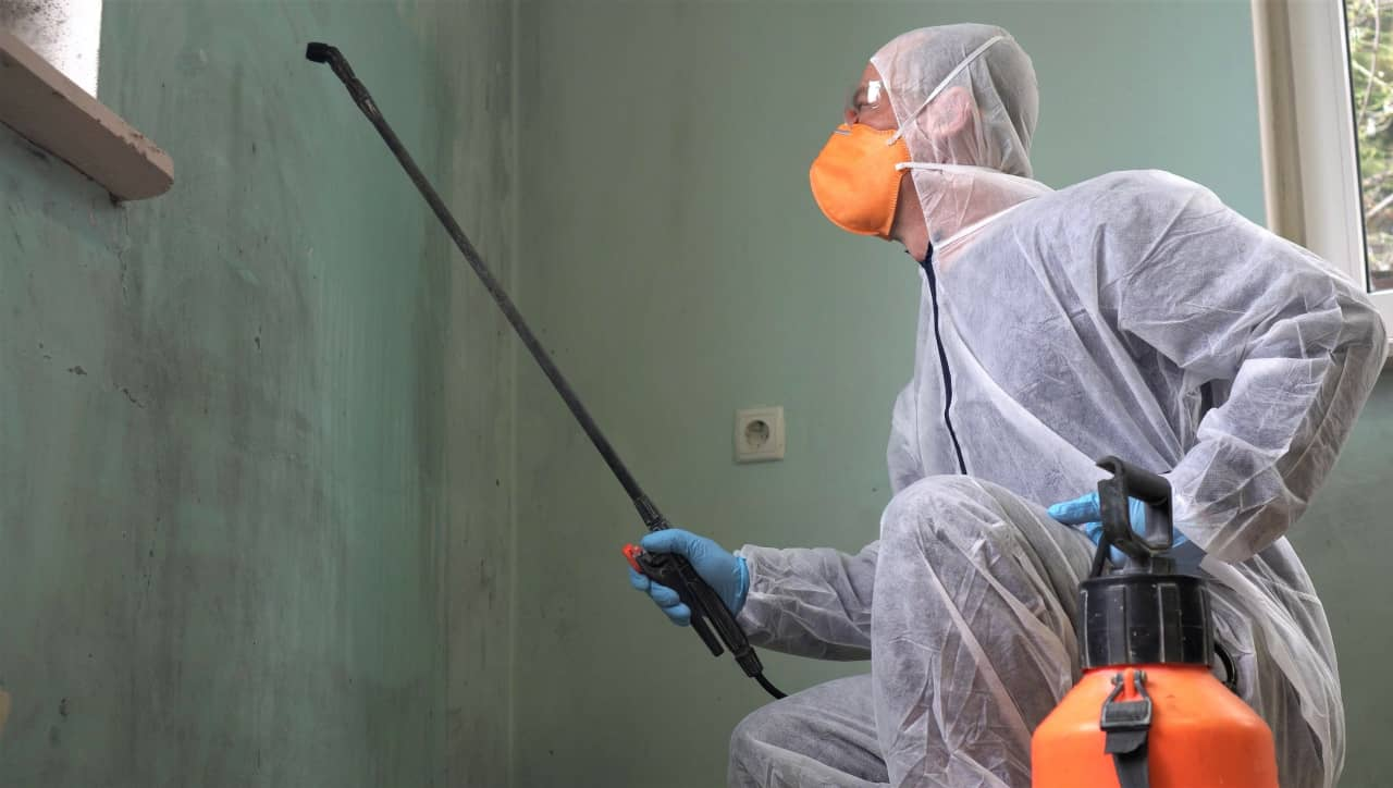 Identifying Mold In Your Home