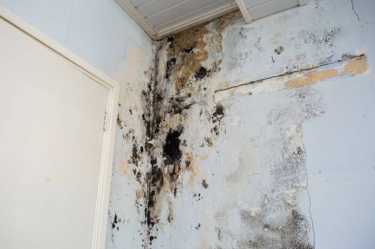Precautions for Homeowners Facing Mold